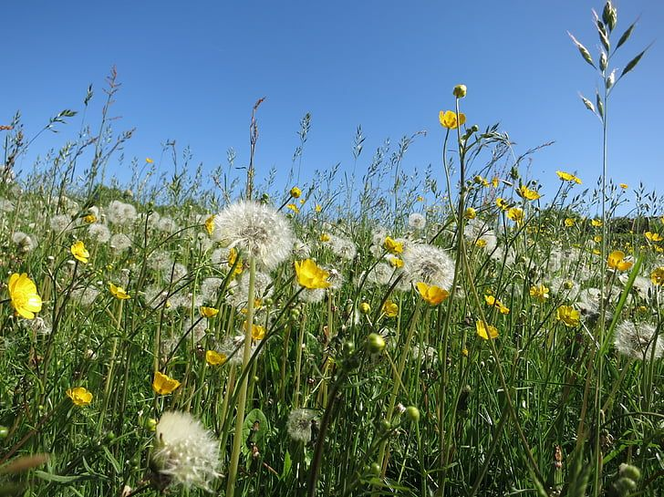 A community of diverse plants in a field including dandelions, buttercups, and grasses.